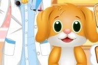 Dentista de animales