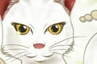 El gato matemático